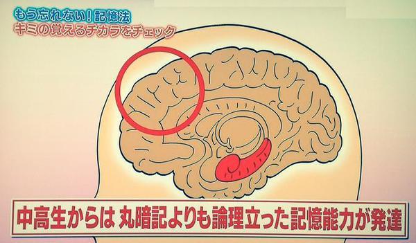 中高生の記憶能力.jpg