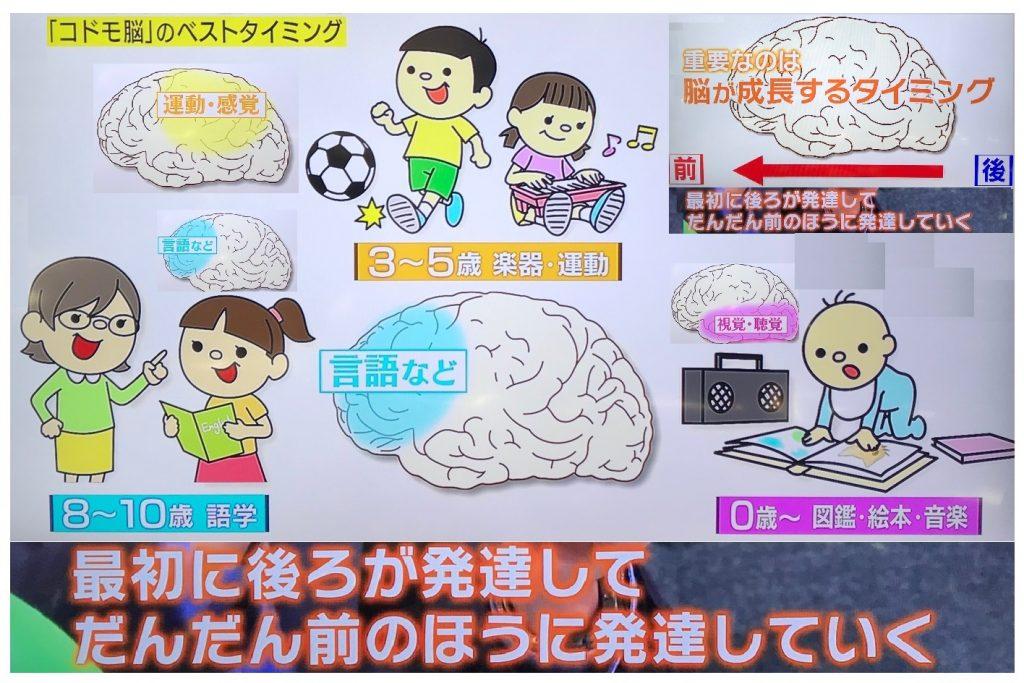 子供脳の発達